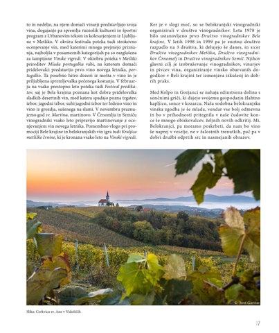 Page 17 of In vino veritas – Vinogradništvo v Beli krajini