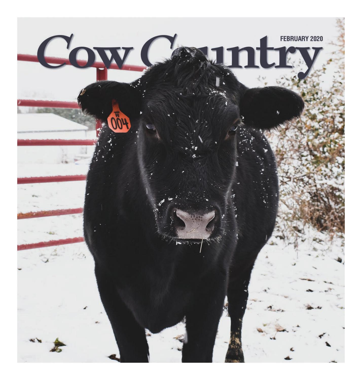 Mens Womens Black Steer Cow Heifer Bull Bovine Calf T-Shirt L 2X   SALE