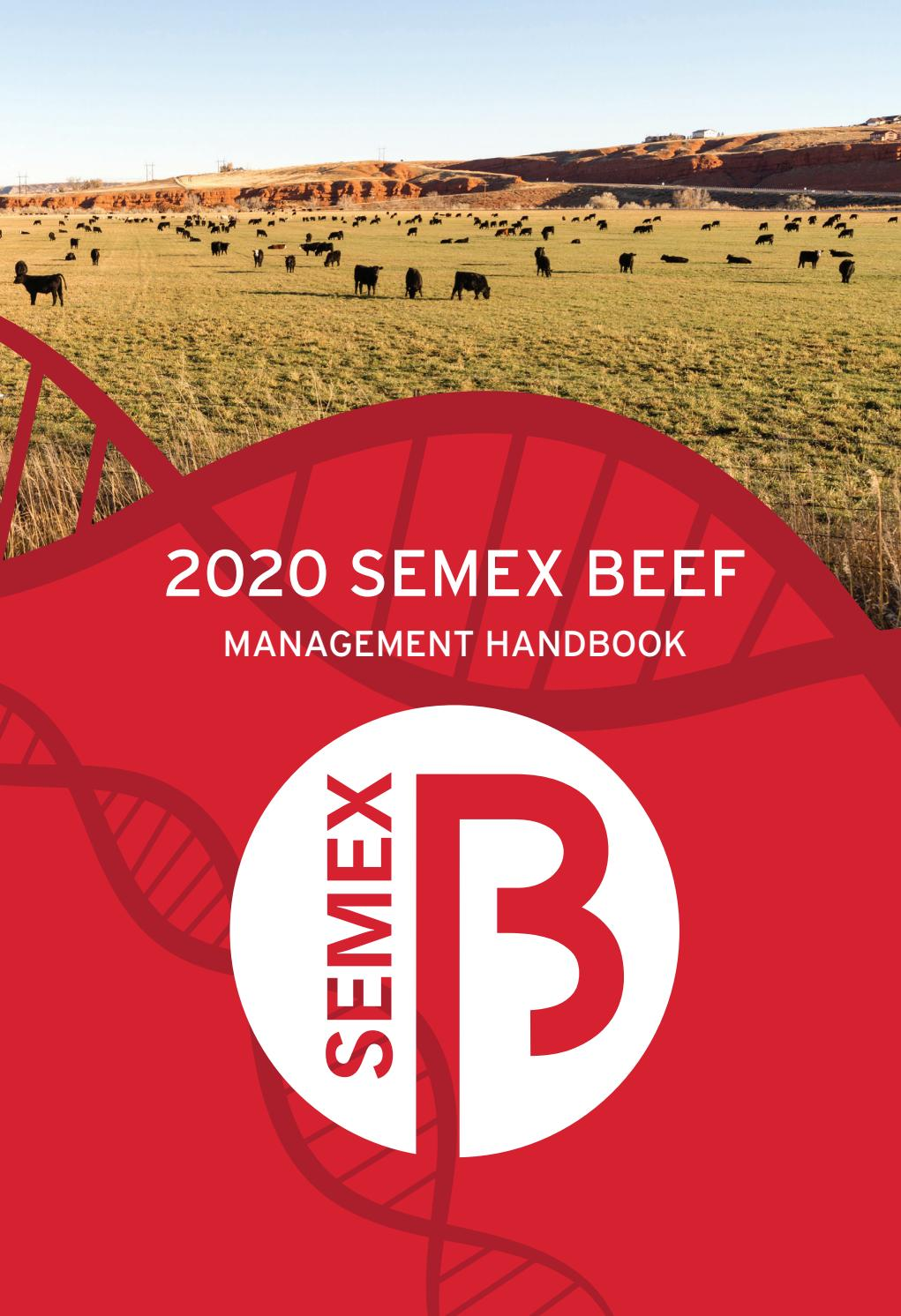 Semex Beef 2020 Management Handbook Usa By Semex Issuu
