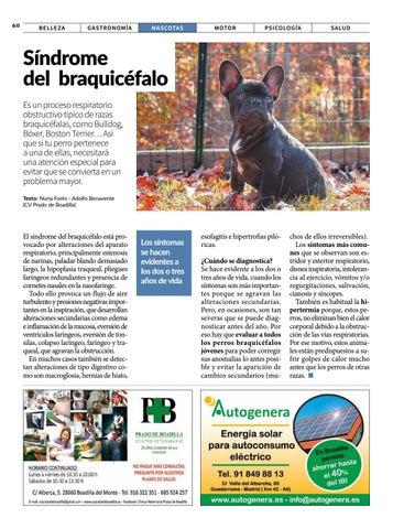 Page 60 of Mascotas: síndrome del braquicéfalo