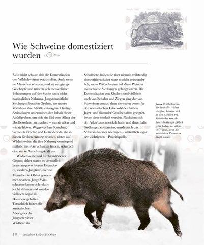 Page 20 of Wie Schweine domestiziert werden