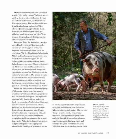 Page 21 of Wie Schweine domestiziert werden