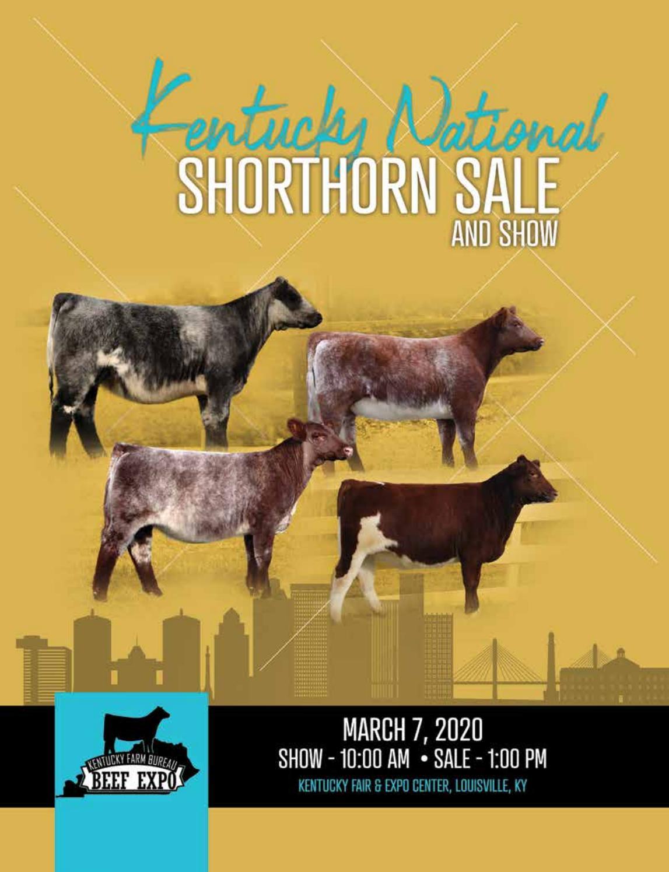 2020 Kentucky National Shorthorn Sale By Sci Stephanie Cronin