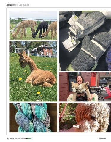 Page 36 of Off the Clock: From finance to fuzzyfaced alpacas, it's all in a day's work for Kathy McConnell