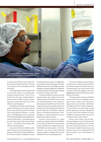 Page 15 of GENETICALLY MODIFIED MOZZIES COMPLETELY RESISTANT TO DENGUE