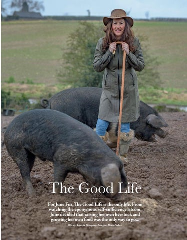 Page 31 of ALL CREATURES GREAT Smallholder