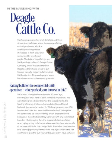 Page 20 of In the Maine Ring with Deagle Cattle Co.