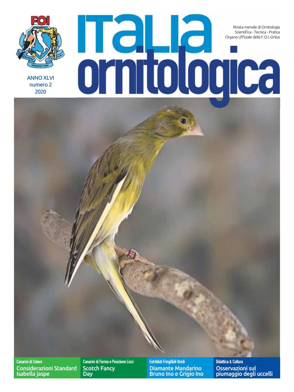Allontanare Lucertole Dal Terrazzo italia ornitologica - numero 2 - 2020 by dinamoweb - issuu