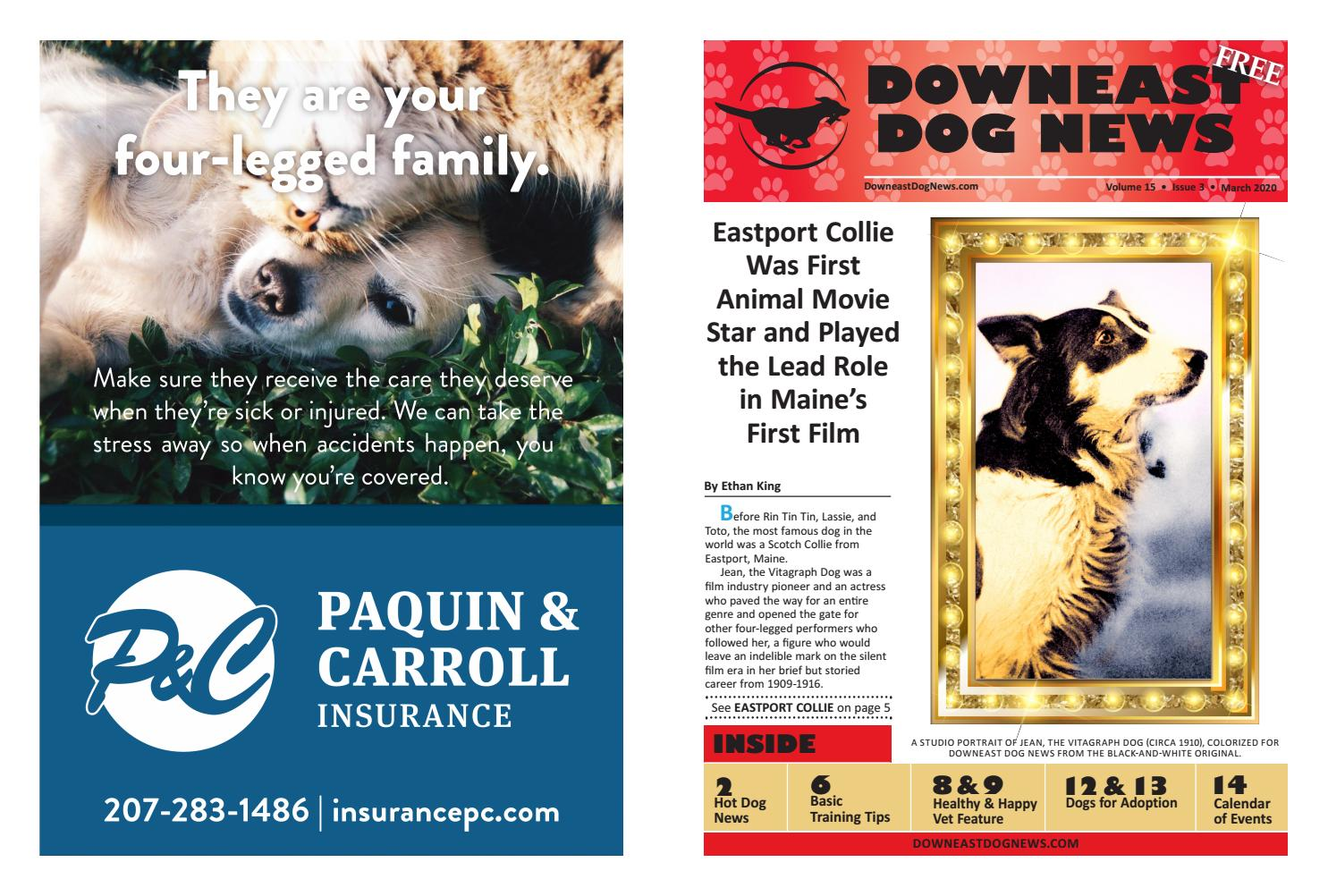 2020 March Downeast Dog News By Jennifer Rich Wendi Smith Issuu