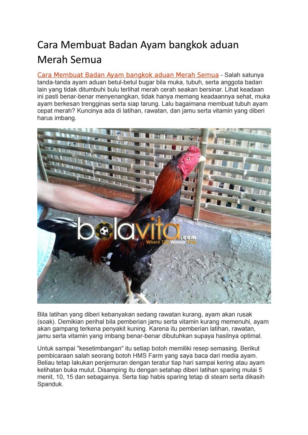 cara membuat badan ayam bangkok aduan