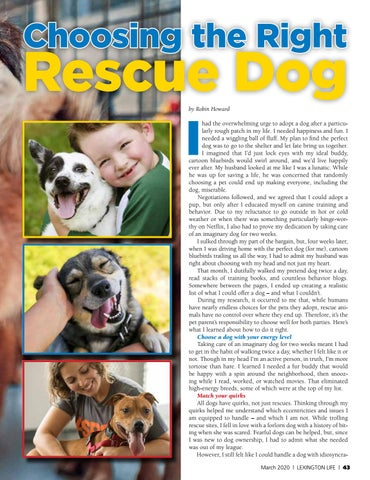 Page 43 of Choosing the Right Rescue Dog