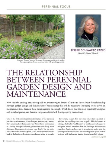 Page 8 of PERENNIAL FOCUS