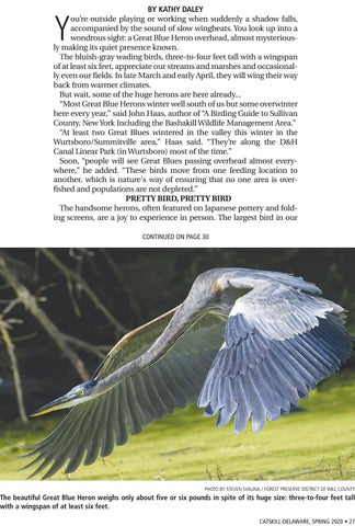 Page 27 of Catskill-Delaware Wildlife: Great Blue Heron