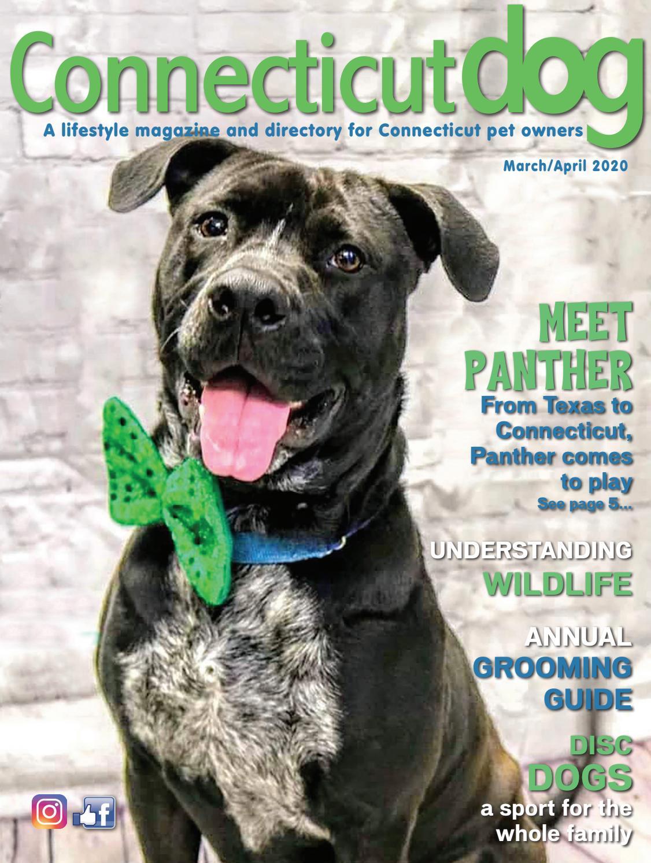 Fund Raiser Dog Rescue !!!! Highest quality 20 JUMBO #1 Mixed Caladium Bulbs