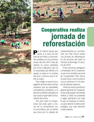 Page 19 of Cooperativa realiza jornada de reforestación