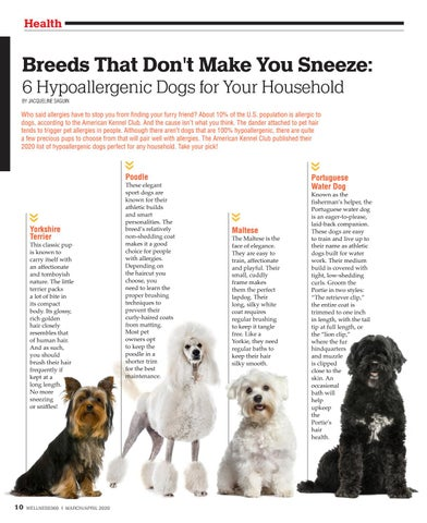 Page 10 of Breeds That Don't Make You Sneeze