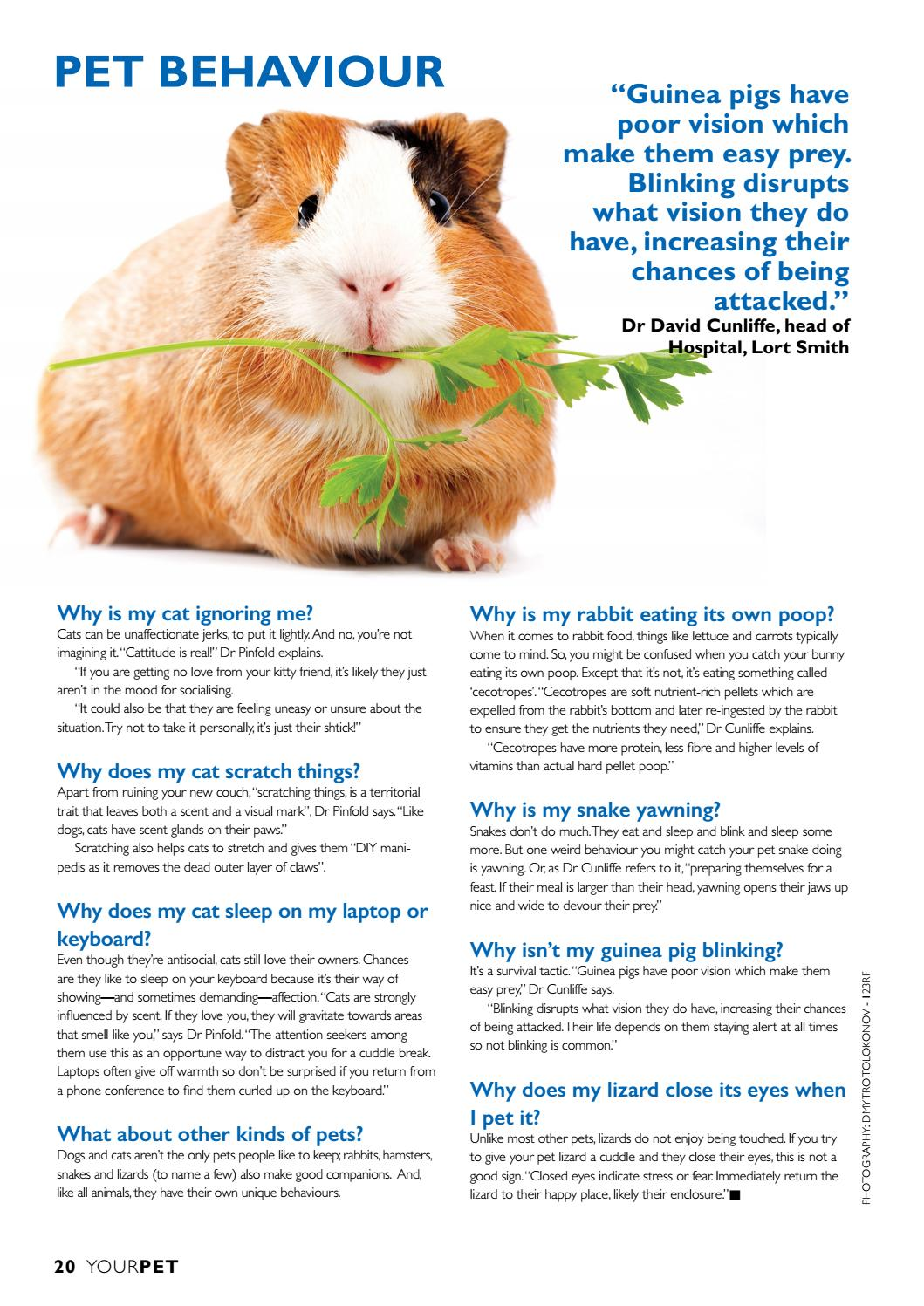 Your Pet March 2020 By Engage Media Issuu