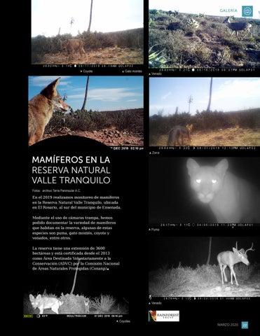 Page 23 of Mamíferos en la Reserva Natural Valle Tranquilo