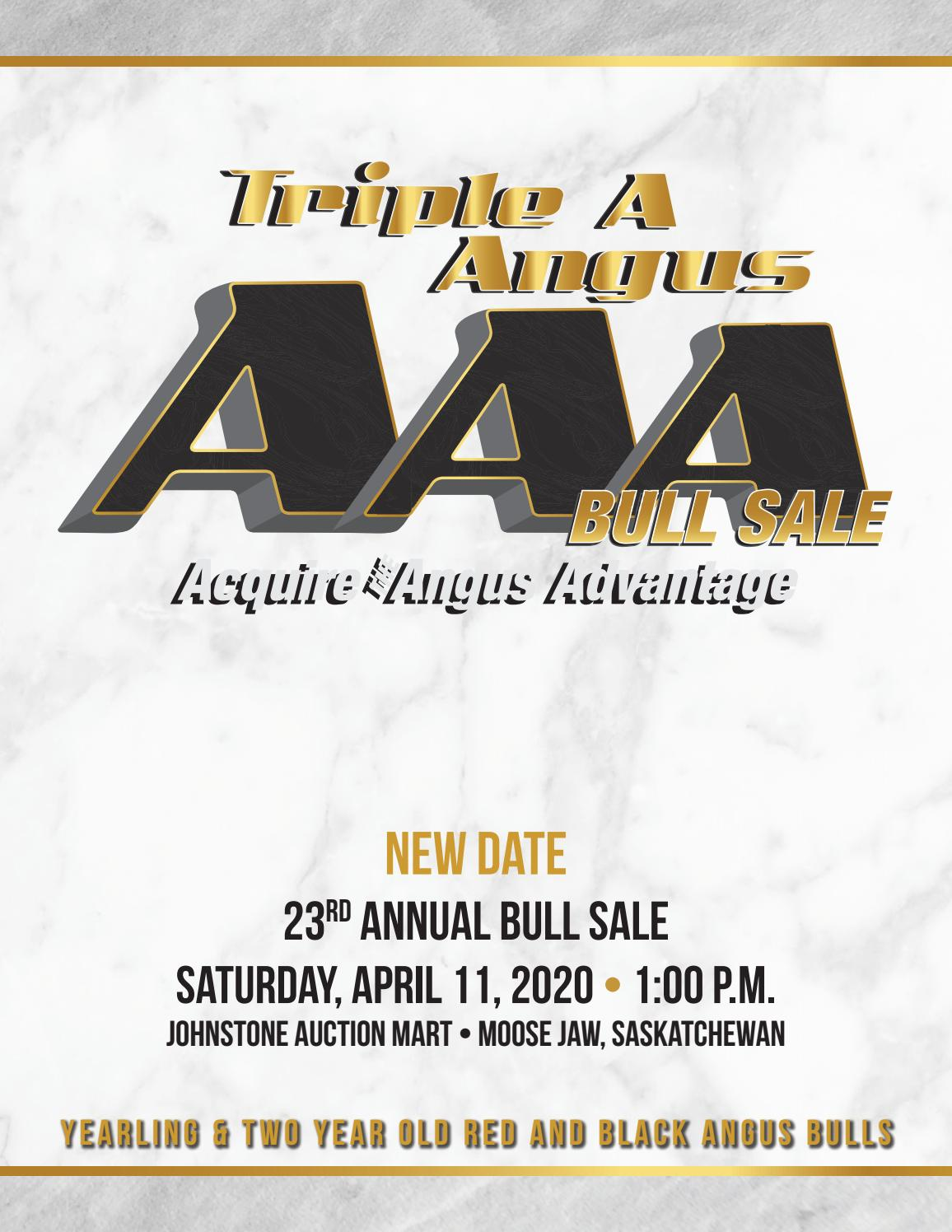 Triple A Annual Angus Bull Sale By Today S Publishing Inc