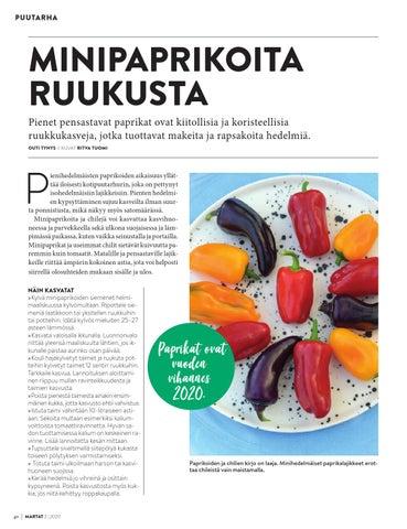 Page 40 of Minipaprikoita ruukusta