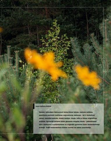 """Page 13 of objektas Aplinkai draugiškas pabėgimo namelis """"Etno Hut"""
