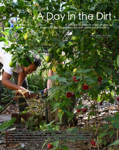 Page 4 of A Day in the Dirt