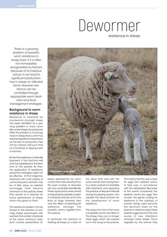 Page 26 of Dewormer resistance in sheep
