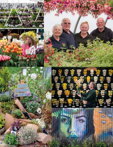 Page 34 of a very eco-sense RHS FLOWER SHOW CARDIFF A chat with some of the local growers showing at the Bute Park flower festival
