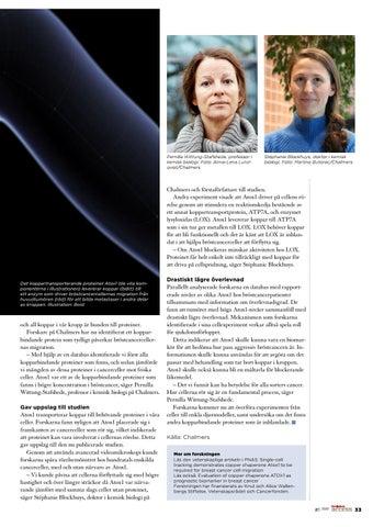 Page 33 of Cancerceller bildar metastaser med hjälp av kopparbindande protein