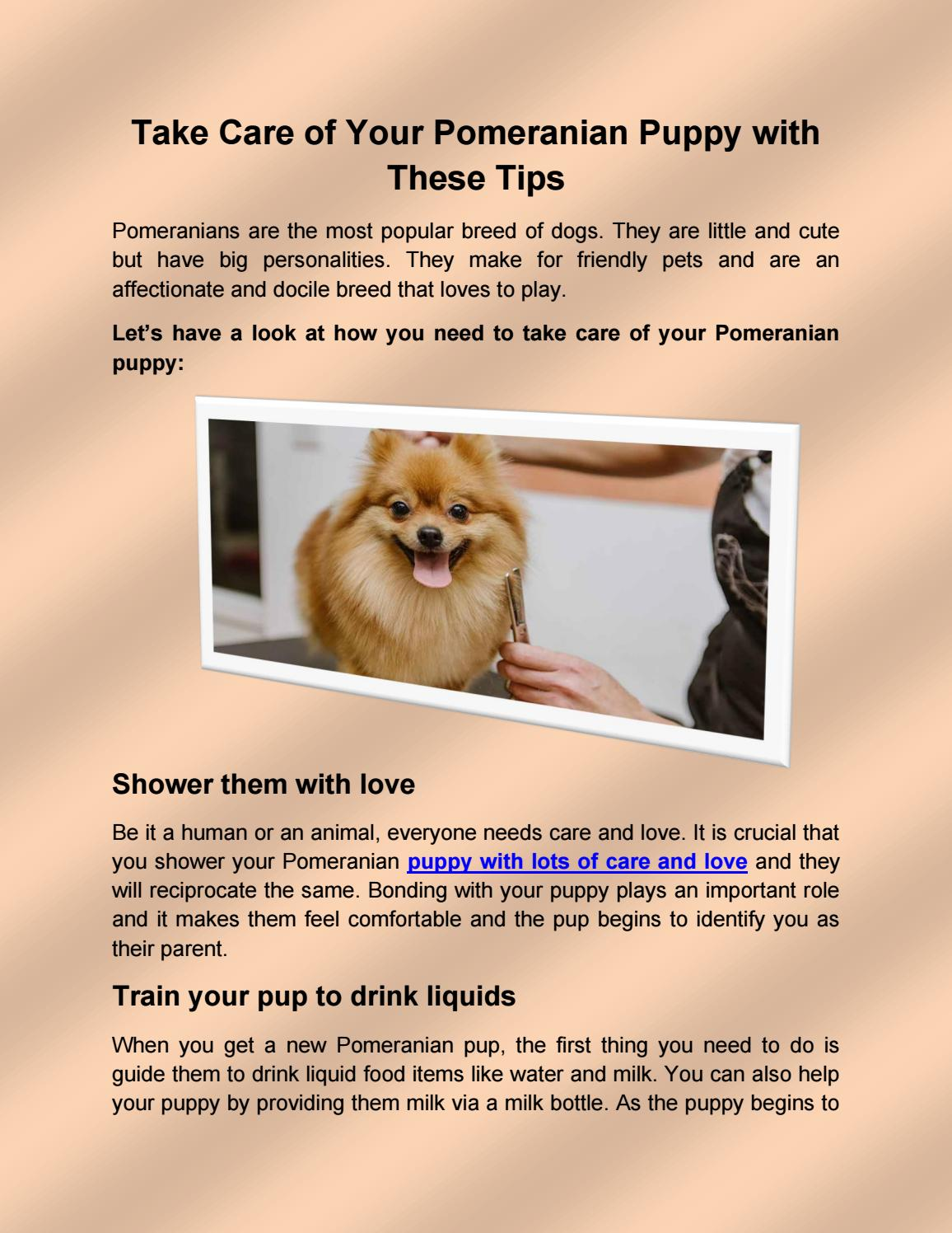 Take Care Of Your Pomeranian Puppy With These Tips By Flauntpet Issuu
