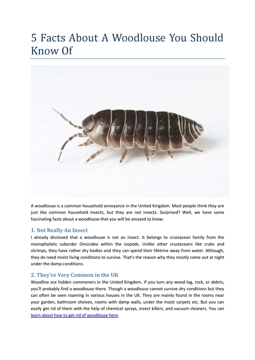 5 Interesting Facts About Woodlouse by Homilly - issuu