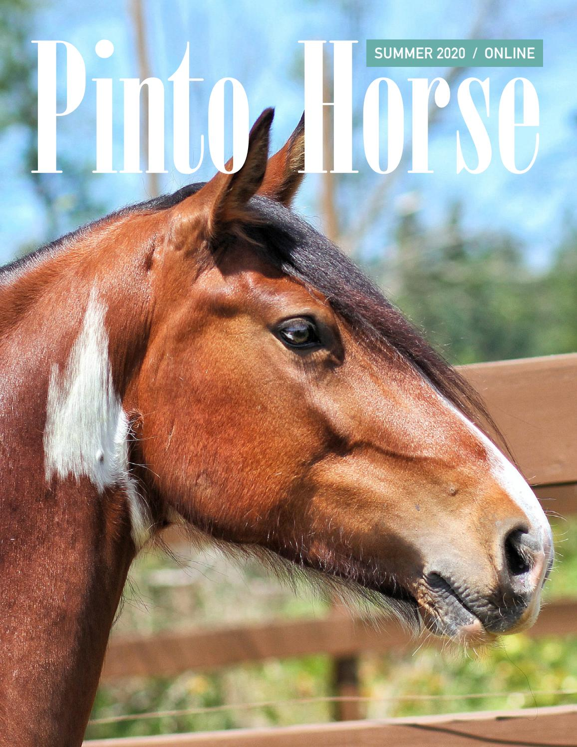 Pinto Horse Magazine Summer 2020 By Pinto Horse Association Of America Inc Issuu