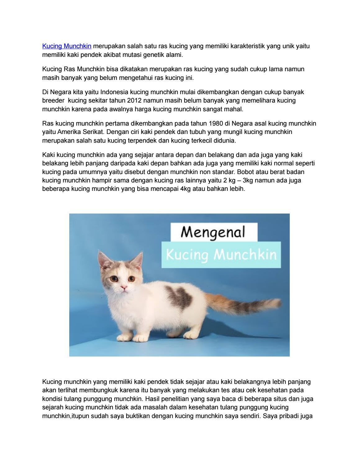 Mengenal Kucing Munchkin Kucing Lucu Dengan Kaki Pendek By Lima Sembilan Cattery Issuu