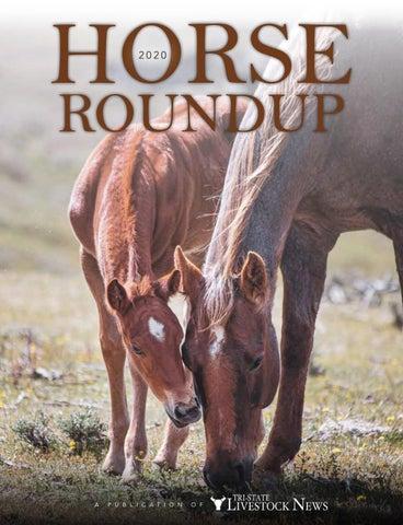 Bargain Old Logo 2 x NEW BEGINNINGS HORSES PENS for New Beginnings Horses