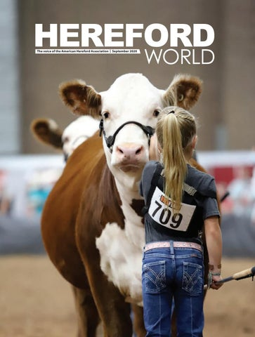 american hereford september 2020 archives american hereford association american hereford association