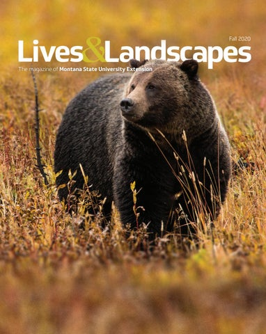 Lives Landscapes Magacine Fall 2020 By Msu Extension Issuu