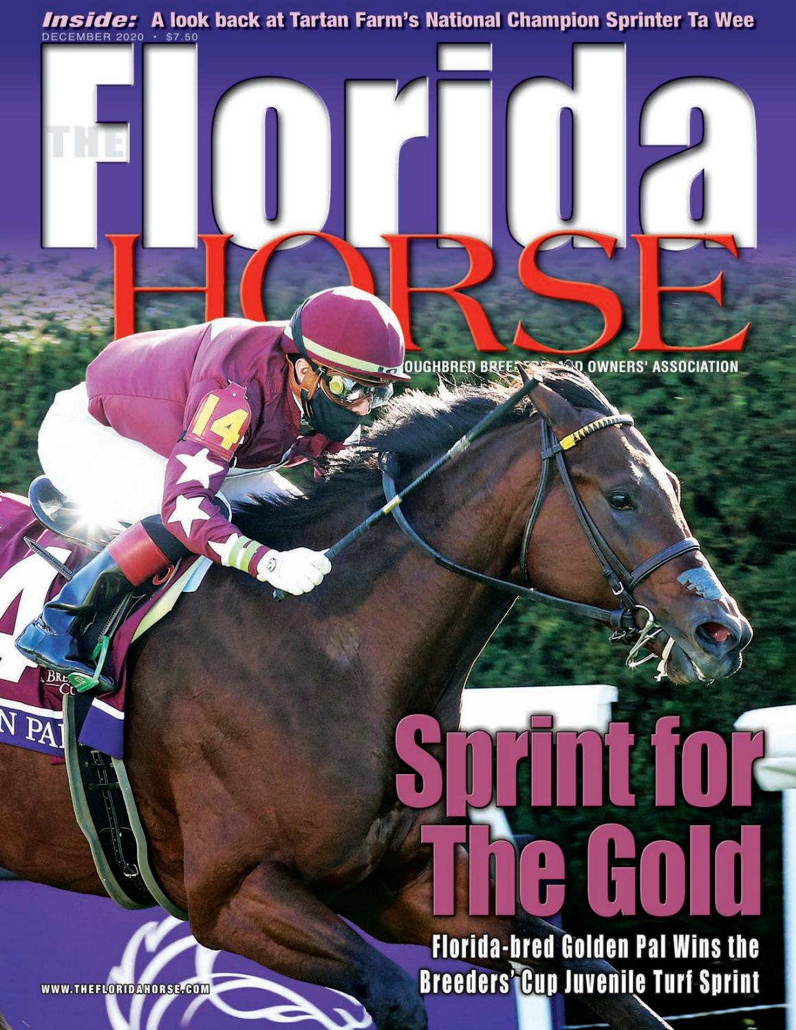 Florida Horse December 25 by Florida Equine Publications   issuu
