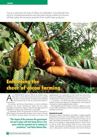Enhancing the cheer of cocoa farming