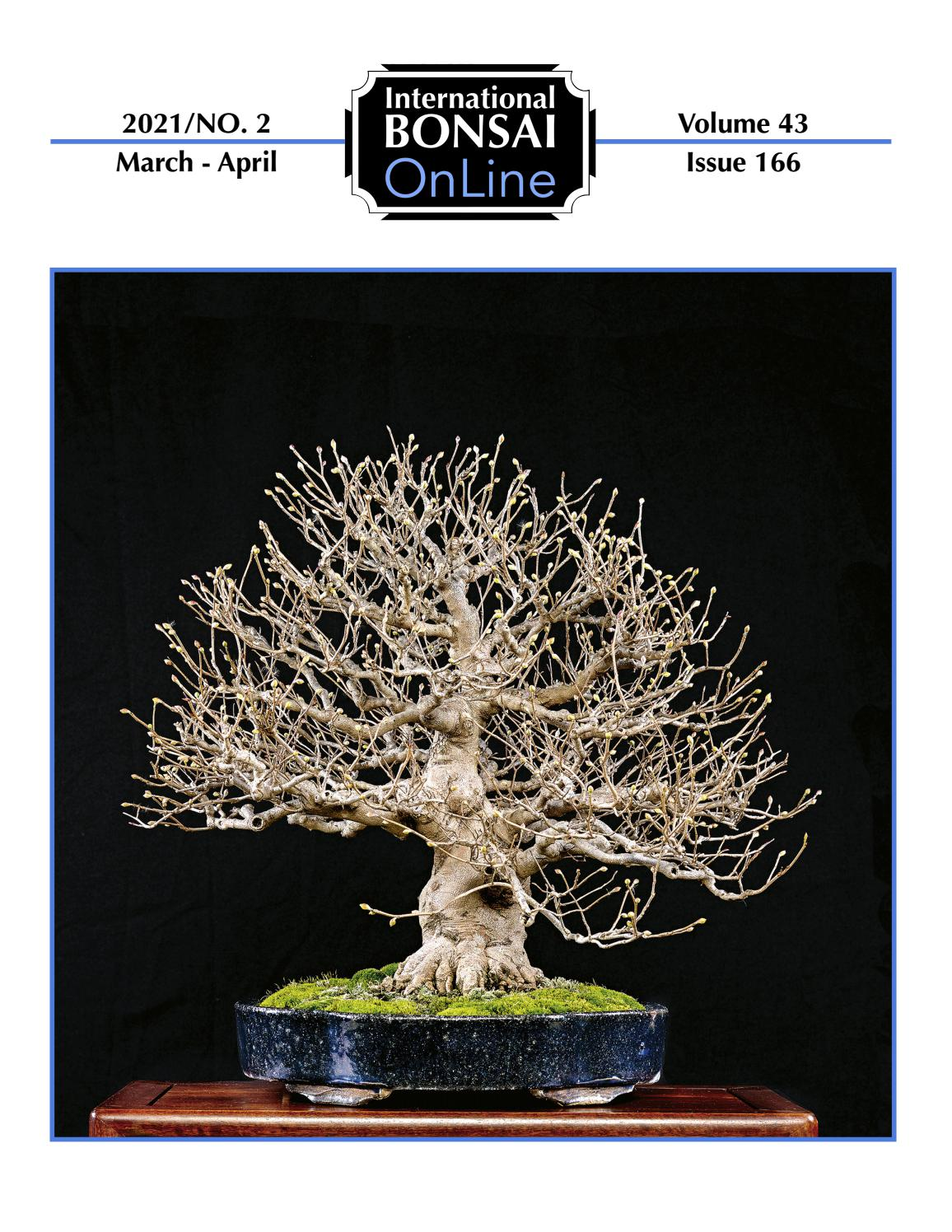 supplied with a free 1 to 1 bonsai lesson Japanese Maple Red leaf Bonsai forest
