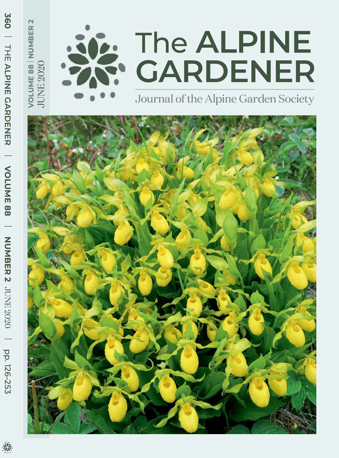 open pollinated 2020 10 fresh hellebore seeds raspberry anemone helleborus
