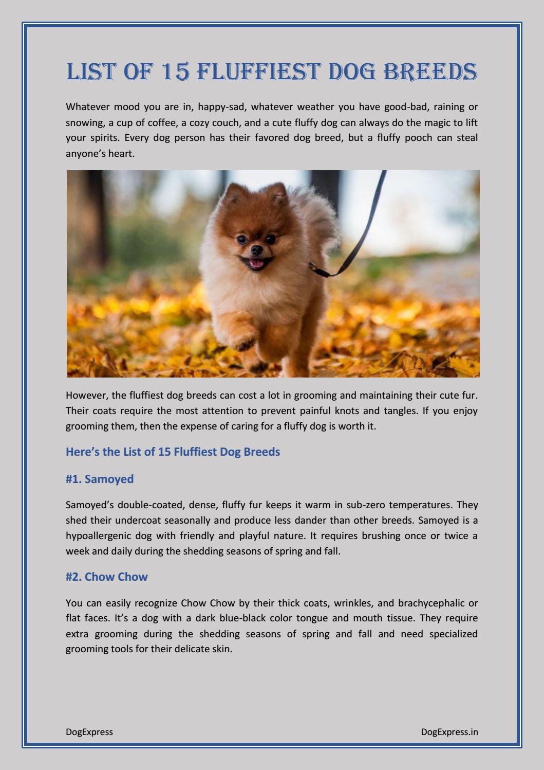 List of 15 Fluffiest Dog Breeds